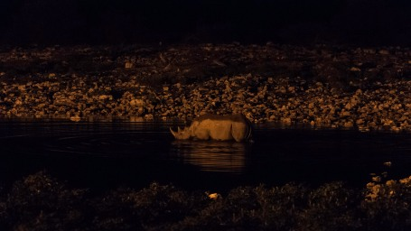 Night swimming
