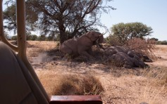 Desert elephants - time for a nap