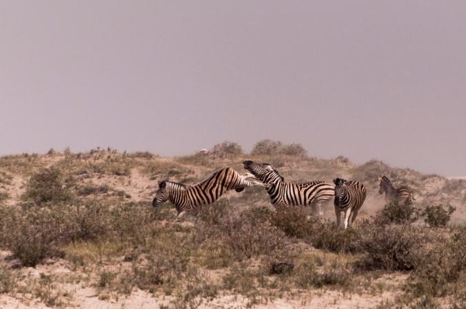 Zebra uppercut
