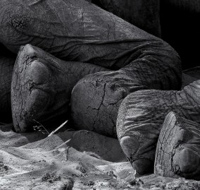 Desert elephants 5