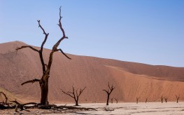 Dead Vlei, Namibia #3