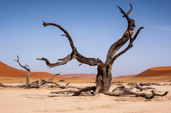 Dead Vlei, Namibia #5