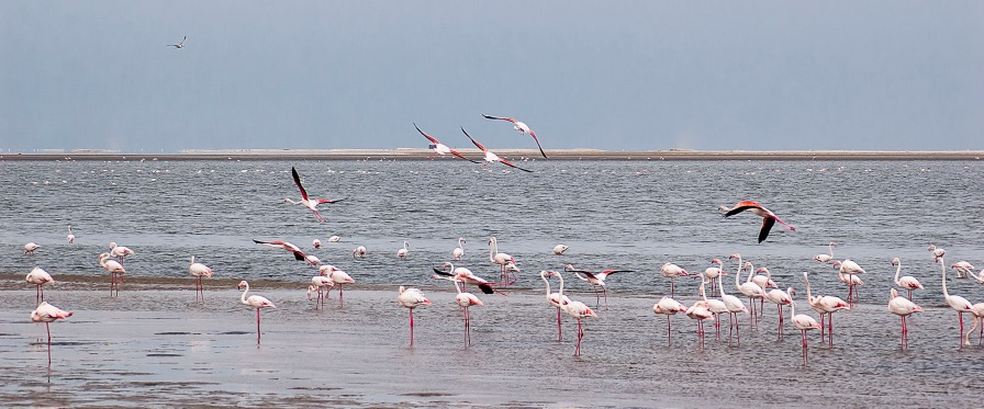 Flamingoes, Walvis Bay