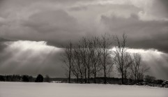 Winter trees # 2, Prince Edward County