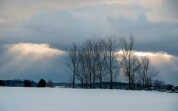 Winter trees, Prince Edward County