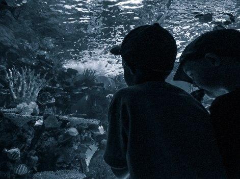 at-the-aquarium-1-matte