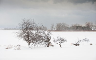 Winter Scene # 2, Prince Edward County
