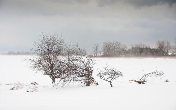 Winter Scenes, Prince EdwardCounty