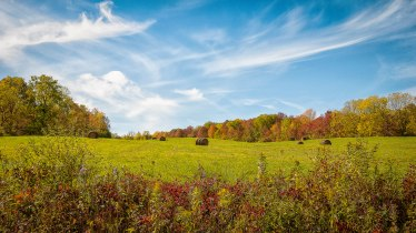 field-schuyler-county