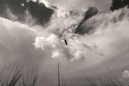 fish-eagle-oddballs-camp-bw