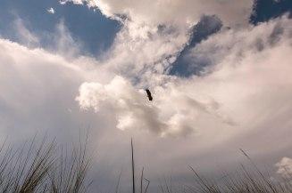 fish-eagle-oddballs-camp
