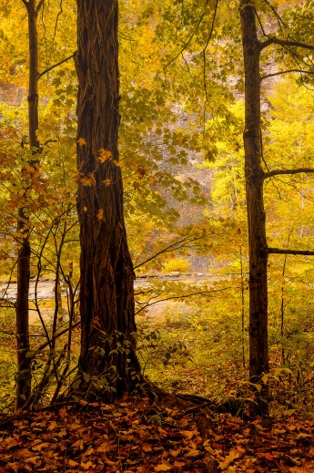 taughannock-state-park-2