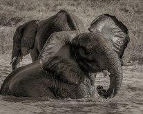 zambezi-elephants-2