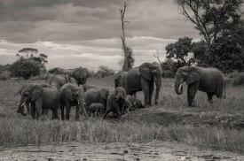 zambezi-elephants-3
