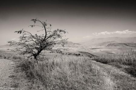 The path diverges. Drakensberg