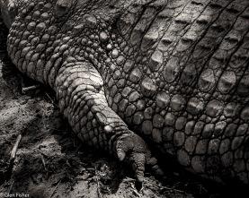 Crocodile hand