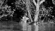 Hippos, St Lucia # 3
