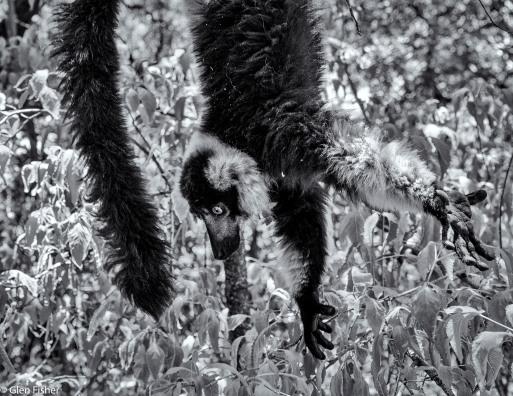 Monkey Sanctuary # 1