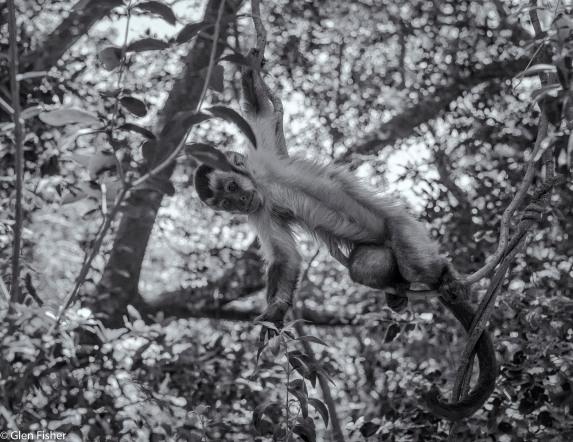 Monkey Sanctuary # 10