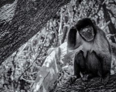 Monkey Sanctuary # 2