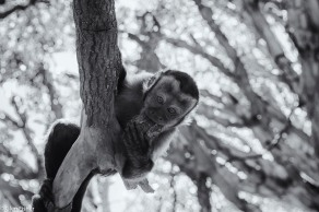 Monkey Sanctuary # 3