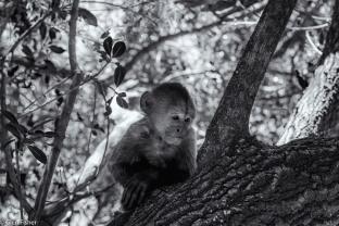 Monkey Sanctuary # 4