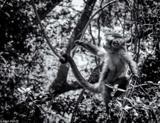 Monkey Sanctuary # 5