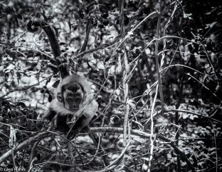 Monkey Sanctuary # 6