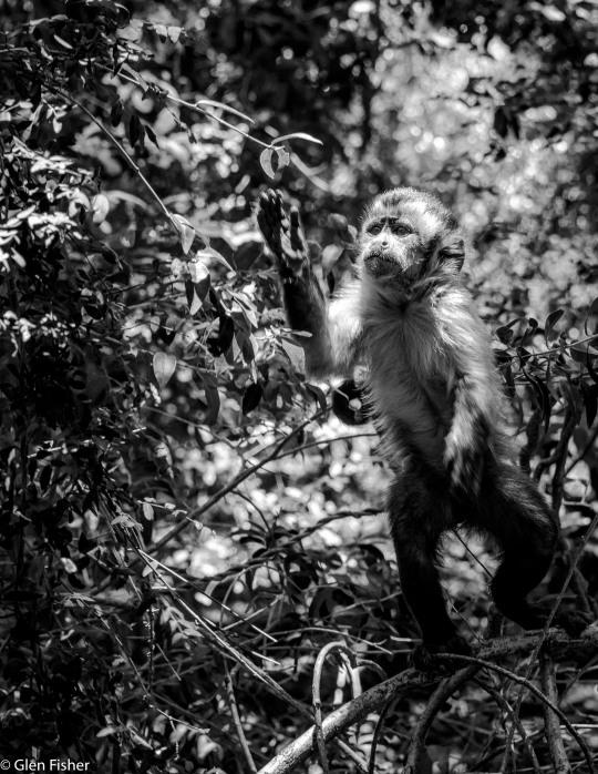 Monkey Sanctuary # 7