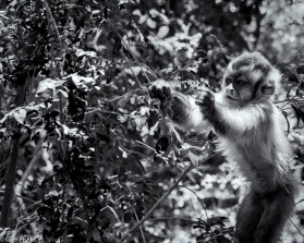Monkey Sanctuary # 8