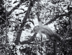 Monkey Sanctuary # 9