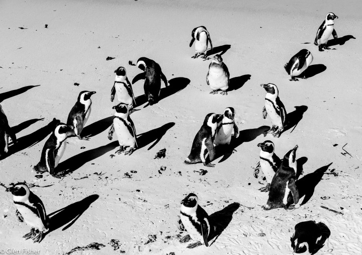 Of penguins andtravel