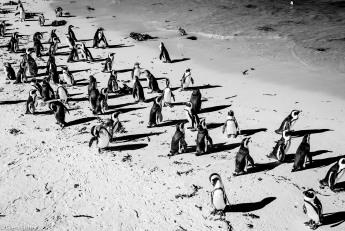 Penguin pattern # 2