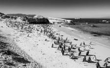 People watching Penguins # 1