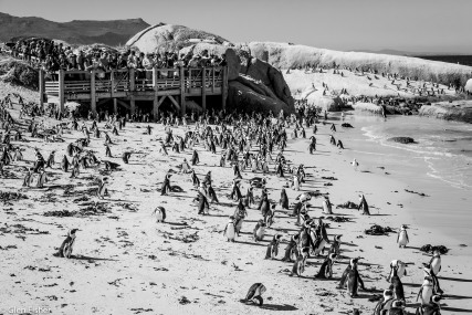 People watching Penguins # 3