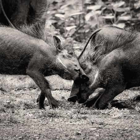 Warthog games # 1