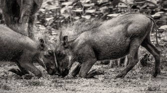 Warthog games # 2