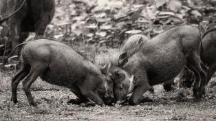 Warthog games # 3