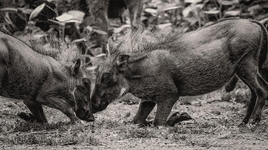 Warthog games # 4