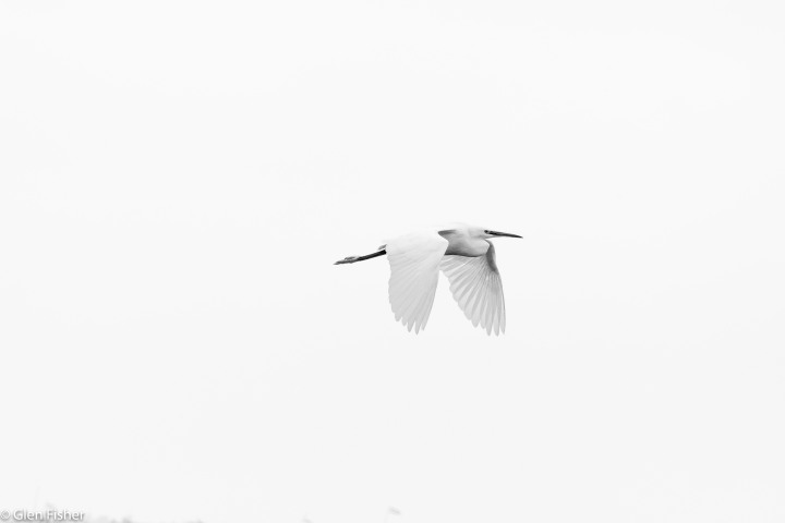 Flight – Five Images