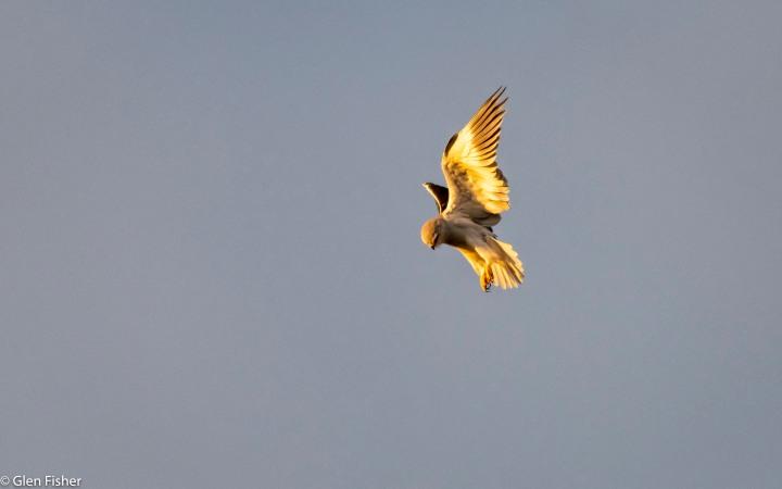 Kite Stooping