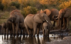 Madikwe elephants # 2