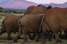 Madikwe elephants # 5