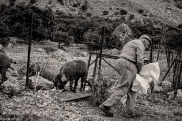 Pig farmer, Grazalema